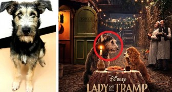 The story of Monte, a stray dog ​​that has become a star in the film Lady and the Tramp (2019)