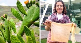 Diese Wissenschaftlerin produzierte einen Beutel aus Kaktusfeigensaft: Er löst sich in einer Woche auf