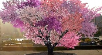 Hier ist der Frankensteinbaum: die unglaubliche Pflanze, die 40 verschiedene Obstsorten produziert