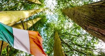 L'Irlanda pianterà 440 milioni di alberi entro il 2040 per combattere il cambiamento climatico