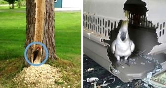 20 images hilarantes qui prouvent que les oiseaux savent être très vilains (et même destructeurs)