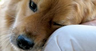 Il tuo cane sa esattamente qual è il tuo stato d'animo, e questo studio lo dimostra