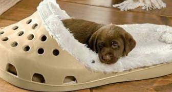 Queste cucce a forma di pantofole giganti sono l'ideale per i cani che adorano rosicchiare scarpe e ciabatte