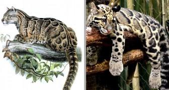 Er galt als ausgestorben, aber dieser Leopard tauchte nach 36 Jahren in Taiwan wieder auf