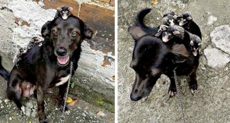 Esta perrita decide de adoptar los cachorros de comadreja demostrando que cosa significa ser madre
