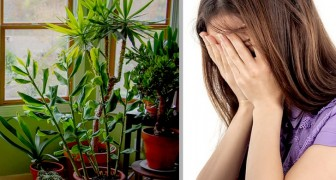 In Inghilterra un team di medici prescrive la cura delle piante per alleviare ansia e solitudine