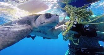 La tartaruga liberata che torna a salutare il suo salvatore