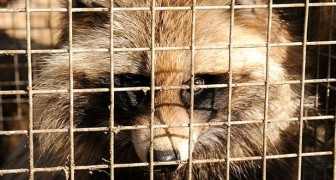 La California vieta ufficialmente agli allevamenti di animali da pelliccia: è il primo stato USA
