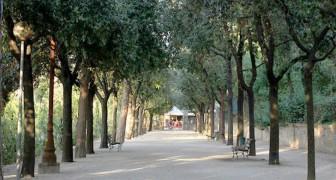 In Italia esiste una legge che obbliga a piantare un albero nelle zone urbane per ogni nuovo nato, ma quasi nessuno la rispetta