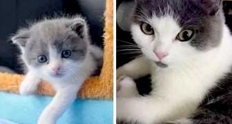 Die erste geklonte Katze in der Geschichte der Wissenschaft heißt Garlic und wird in China geboren