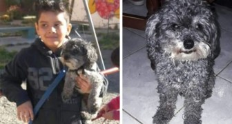 Dieses autistische Kind bietet sein Fahrrad als Belohnung dafür an, dass Tito, sein geliebter kleiner Hund gefunden wird