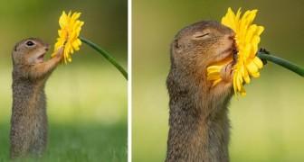 Questo fotografo ha catturato il momento esatto in cui uno scoiattolo si ferma ad annusare un fiore