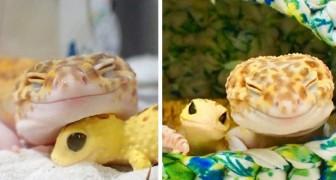 Deze gekko houdt niet op met glimlachen als hij in het gezelschap van zijn speelgoedgekko is