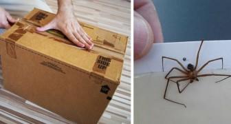 Online winkelen: een expert waarschuwt voor de mogelijke risico's van ongedierte met betrekking tot pakketbezorgingen