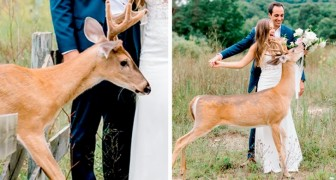 A deer interrupts a wedding photoshoot but the images are both funny and adorable