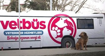 VetBus: la clinica veterinaria su ruote che gira per Istanbul curando cani e gatti randagi