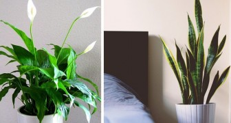 8 plantes que vous devriez garder chez vous pour améliorer la qualité du sommeil, d'après des recherches