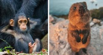 De finalefoto's van deze wedstrijd tonen de meest komische kant van het dierenrijk