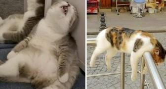 Diese 15 Aufnahmen zeigen Katzen in den unvorstellbarsten Positionen