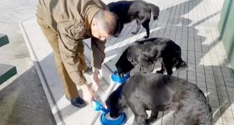 Questo poliziotto gentile trascorre parte del suo tempo libero donando cibo e cure ai cani randagi