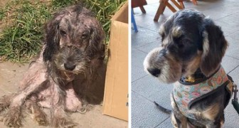 Faustino's story is one of abandonment and severe abuse and he was found by his rescuer just in time