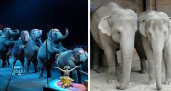 La Danimarca vieta l'utilizzo di animali nei circhi e compra gli ultimi 4 elefanti rimasti per poterli liberare