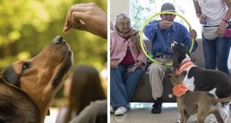 Questa associazione toglie dalla strada i cani abbandonati e li addestra come animali da terapia
