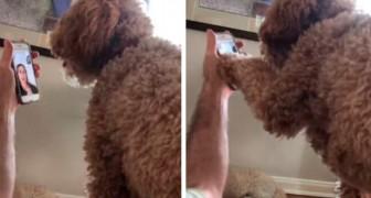 Un cane rivede la sua padrona in videochiamata dopo 12 giorni e ha una reazione dolcissima