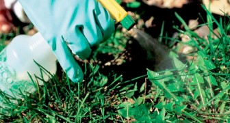 La Germania bandirà l'uso del glifosato nei pesticidi entro la fine del 2023