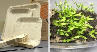 Papelyco, il piatto 100% biodegradabile ricavato dalle bucce di ananas che si trasforma in fiore