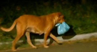 A dog travels several miles every night to get food and take it back to her puppies