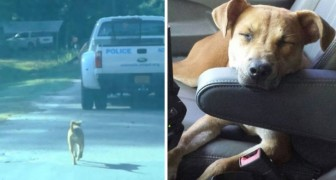 A dog chases a police car and is hired as a therapy dog for children