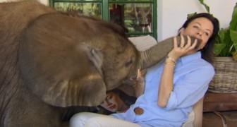 La elefantita huérfana arriesgaba de no poder lograrlo, pero esta mujer la ha salvado a tiempo: ahora son inseparables
