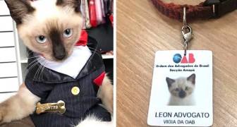 Questo gattino randagio cercava rifugio in uno studio legale, così gli avvocati lo hanno assunto