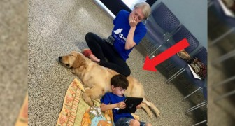 A mother bursts into tears seeing her autistic son with his assistance dog: I've never seen him so peaceful