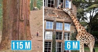 12 foto che mostrano cose, animali e costruzioni che non pensavate fossero così grandi