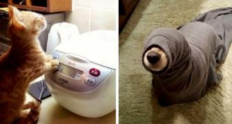 Dessa husdjur från hela världen kommer att erövra dig med sina konstigheter