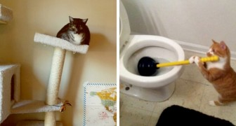 15 gatti auto-ironici da tutto il mondo che miglioreranno la vostra giornata con una risata