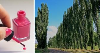 Pioppi mangia-plastica: secondo questa ricerca, le radici assorbono gli ftalati e aiutano a combattere l'inquinamento
