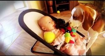 Le chien qui vole le doudou au bébé, mais il saura se faire pardonner <3