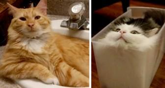 21 raisons amusantes pour lesquelles les chats vont un jour conquérir le monde