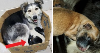 Abandoned with her 9 puppies in a sealed cardboard box but luckily a man saves them