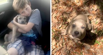 This brave dog saves his owners' children and is bitten by a poisonous snake