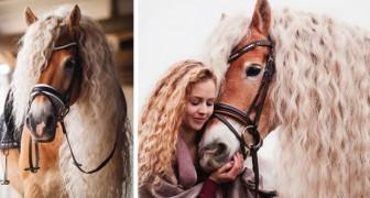 Ce cheval a une crinière si enchanteresse qu'il n'a rien à envier aux personnages de conte de fées