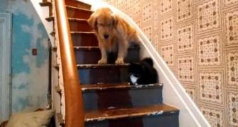 Já deu pra ver que é o gato quem manda nesta casa!