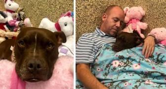 Den här mannen sov på djurskyddshemmet tillsammans med den här lilla hunden som ingen ville ha och lyckades på så sätt få henne adopterad