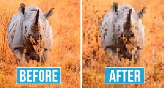 Foto di animali a rischio estinzione: la quantità di pixel corrisponde alla quantità di esemplari rimasti