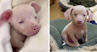 The story of Piglet, a little pink dog that helps children to appreciate the world around them