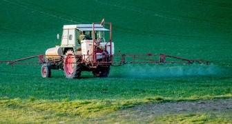 Il glifosato utilizzato nei pesticidi non sarebbe cancerogeno: lo ha stabilito l'Unione Europea