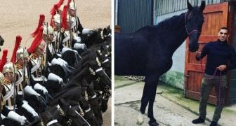 Heute möchte ich ihm danken: So adoptierte ein Ex-Soldat das Pferd, das ihm während seines Militärdienstes geholfen hat